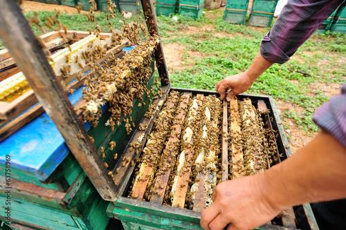 Photo beekeeping