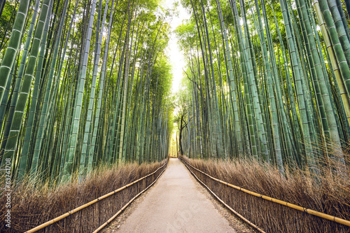 Foto op Canvas Bamboo Bamboo Forest, Kyoto, Japan