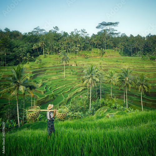 Foto op Canvas Bali Bali rizières, Indonésie