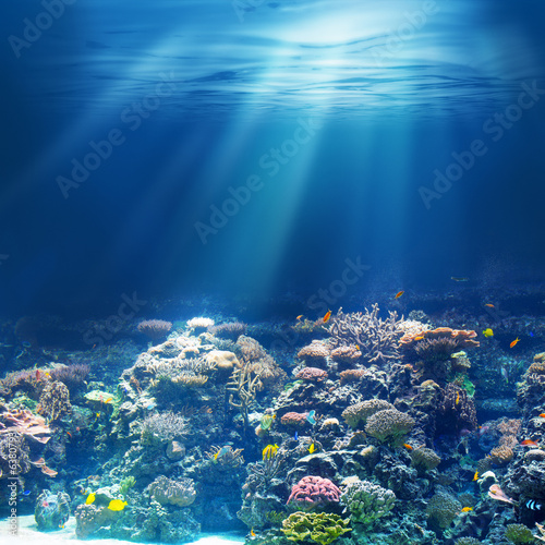 Stickers pour portes Recifs coralliens Sea or ocean underwater coral reef