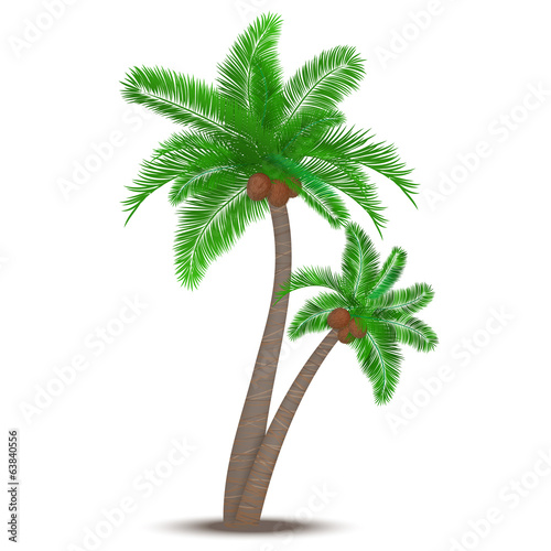 Tropical palm tree with coconuts
