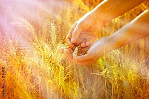 Foto auf Gartenposter Landschappen Rays of the setting sun on hands of farmer - wheat in hands