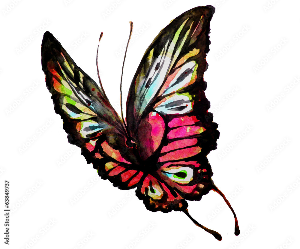 projekt motyli