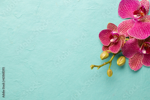 Poster Orchidee Orchid.