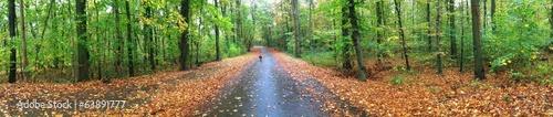 Panorama von Wald im Herbst
