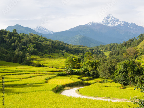 Wall Murals Nepal Rice Fields and Macchapuchchhare in the Annapurna Himalaya
