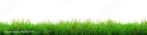Foto op Plexiglas Gras gorgeous green grass summer isolated on white background