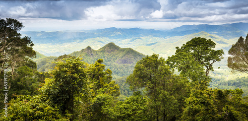 Foto op Canvas Bamboo Queensland Rainforest