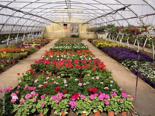 Fotografia  Serra con piante e fiori