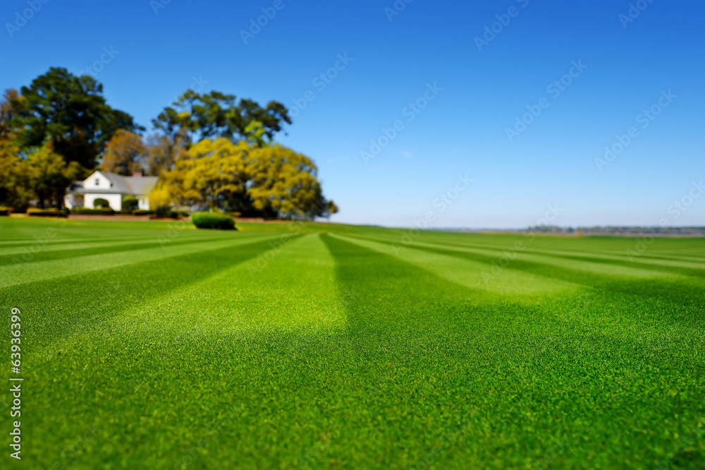 Fototapety, obrazy: Perfectly striped freshly mowed garden lawn