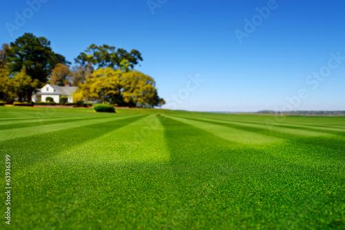 Fotografie, Obraz  Perfectly striped freshly mowed garden lawn