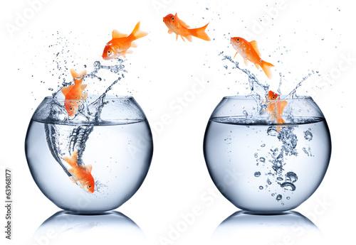 zlota-rybka-zmiana-koncepcji-na-bialym-tle