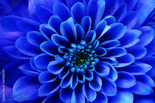 Photo Stands Macro photography Macro of blue flower aster