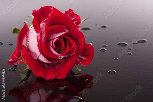 kwiat-rozy-z-odbiciem-na-ciemnej-powierzchni-martwej-natury