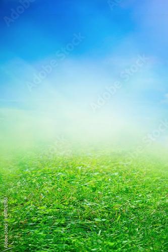 Deurstickers Gras Spring sunny field