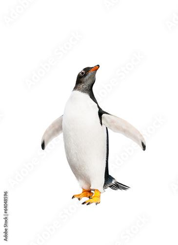 Carta da parati gentoo penguin over white background