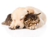 Szczenię golden retriever i kot
