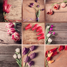 Collage With Tulips On Wooden ...