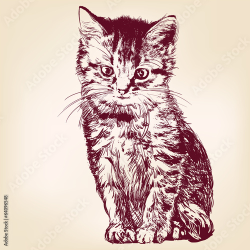 cat  - hand drawn vector llustration isolated