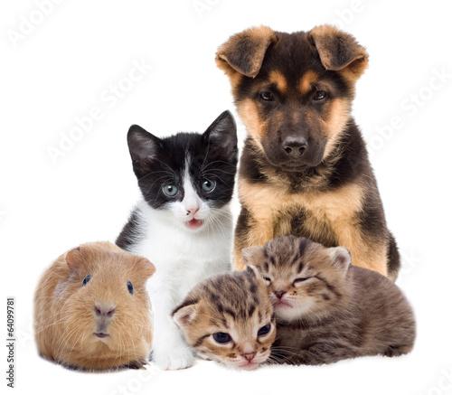 Fototapety, obrazy: set pets