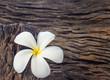 frangipani flower (Plumeria) on wood