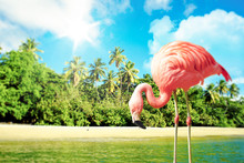Pink Flamingo In The Water On ...