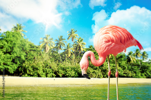 Fotobehang Flamingo Pink flamingo in the water on a tropical scenery