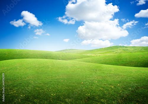 Foto auf AluDibond Landschappen Green Rolling Fields