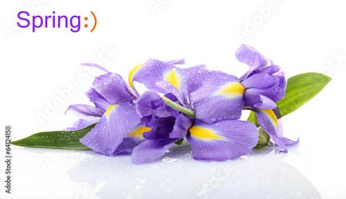 Poster Iris Beautiful iris flower isolated on white