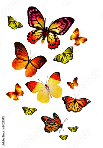 Tuinposter Vlinders Many different butterflies, isolated on white background