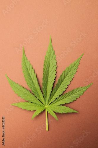Poster Vegetal Cannabis Leaf