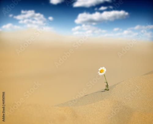 Poster de jardin Desert de sable Survival