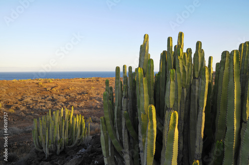 Foto op Plexiglas Cactus Succulent Plant Cactus on the Dry Desert