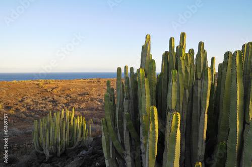 Keuken foto achterwand Cactus Succulent Plant Cactus on the Dry Desert