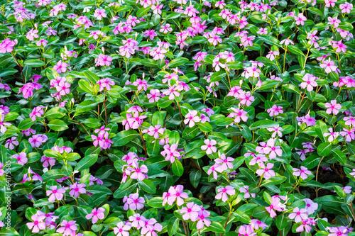 Fotografie, Obraz  flower garden