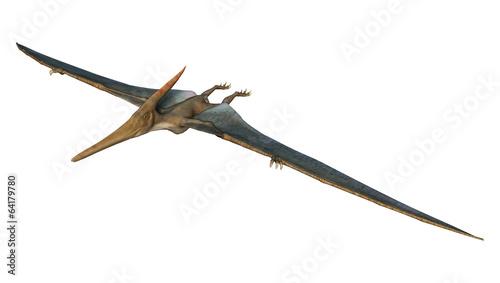 Photo  Pteranodon