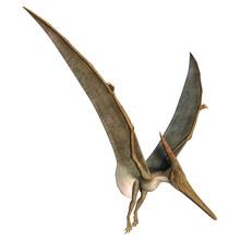 Landing Pteranodon