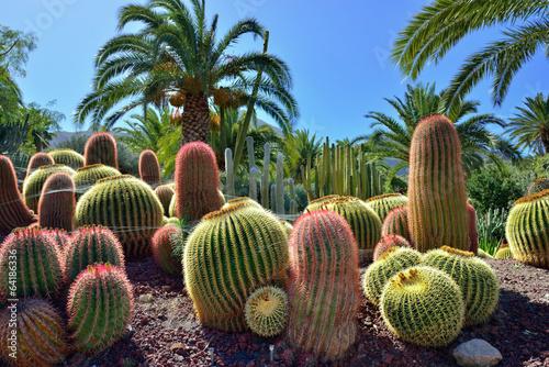Cadres-photo bureau Cactus Cactus garden