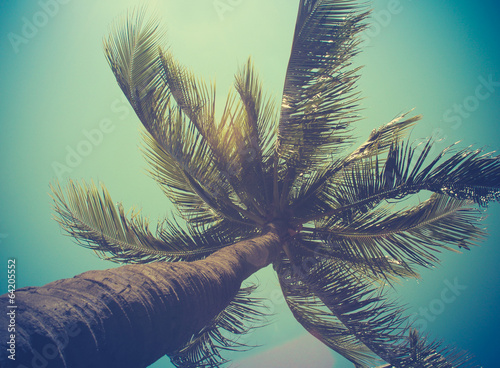 Fototapeta Retro Filtered Single Palm Tree