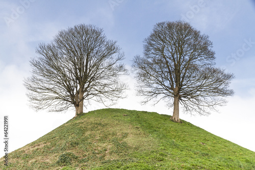 фотография  Two Trees on a Hill
