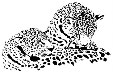 Fototapeta Pantera Big cats Jaguar, cheetah, leopard, vector illustration, isolated