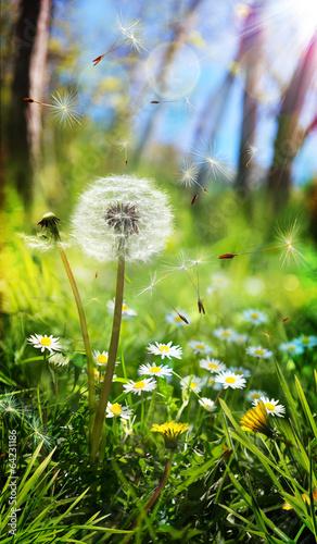 wiosna-i-koncepcja-alergiczna