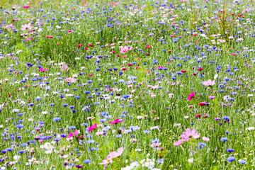 Naklejka Kwiaty prairie fleurie