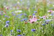 canvas print picture - prairie fleurie