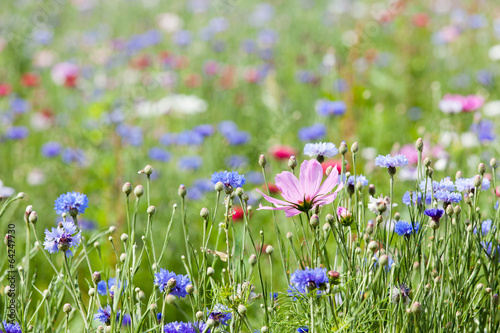 Fotografie, Tablou prairie fleurie
