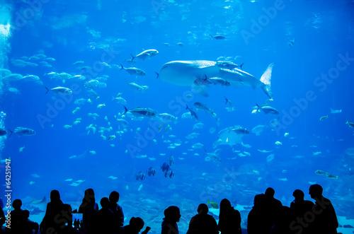 Fotomural Tiburones ballena nadando en el acuario con la gente observando