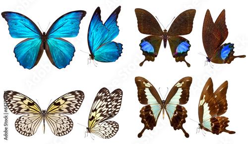 Obraz na plátně  beautiful butterfly isolated on white