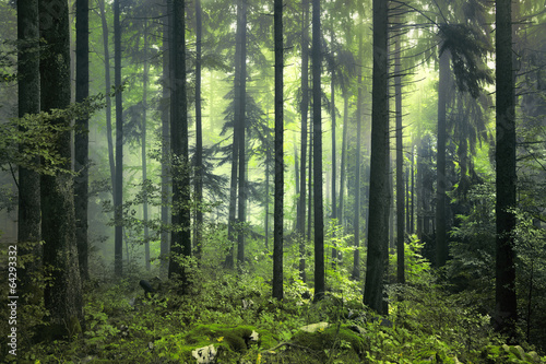 Mysterious dark forest - 64293332