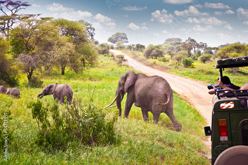 Elephants family on pasture in African savanna . Tanzania
