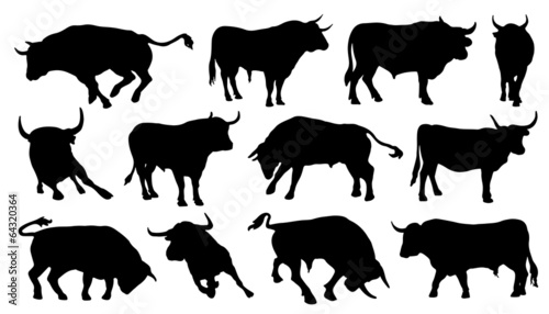 Valokuva bull silhouettes